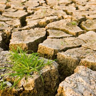 Cambio climático: acciones por el clima